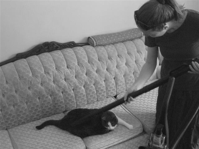 Even the dreaded vacuum was no match for the Wusser-Si.  It was just another day at the spa.