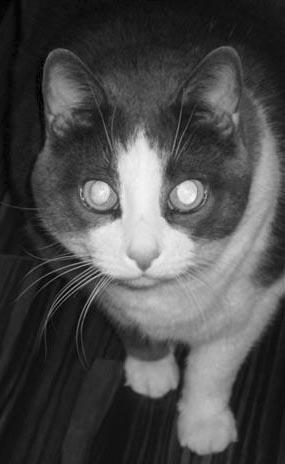 Laser-eyed Si