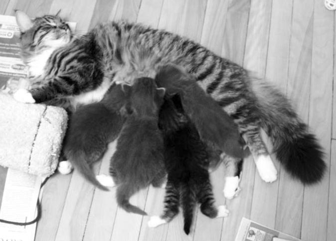 Mama Bijoux and the Itty Bitty Kitty Committee (2005)